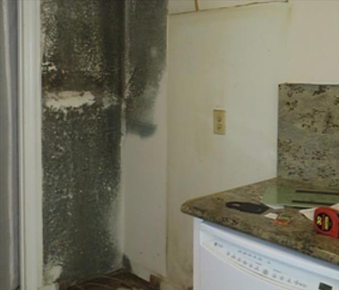 Mold Damage in Kitchen Before