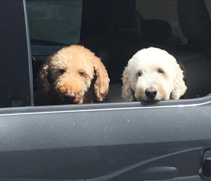 two dogs riding in car