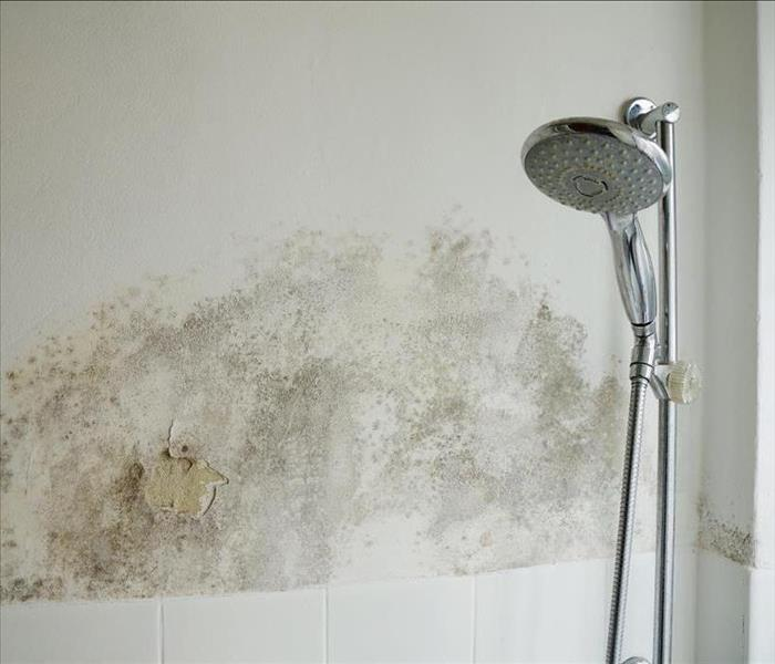 Mold Remediation Preventing Mold Growth in the Shower