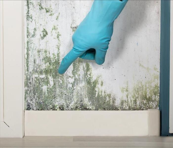 Mold Remediation Quick Statistics about Mold Growth